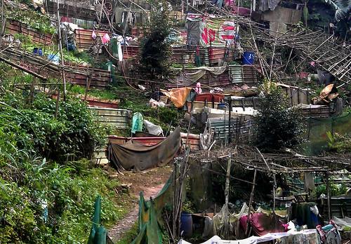 土城區文筆山系步道。(圖片來源:台灣千里步道協會)