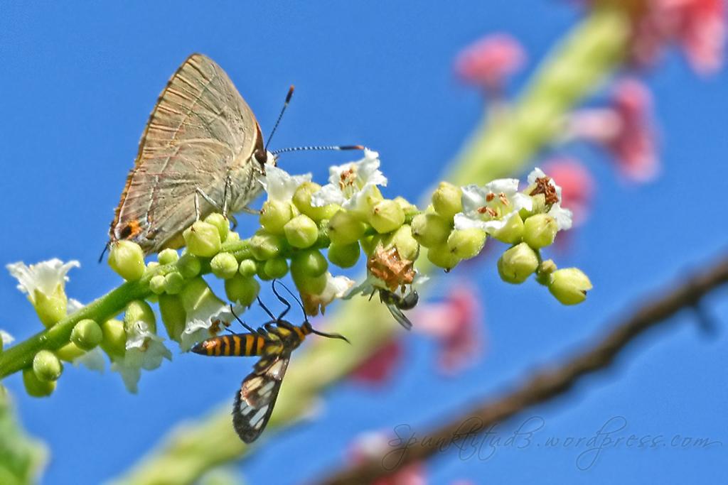 Butterflies at Seletar Country Club Butterfly Garden