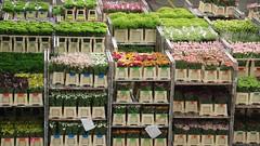 Aalsmeer FloraHolland Flower Auction