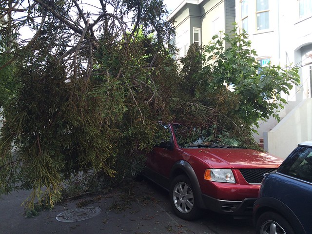 Fallen tree on car, Mission