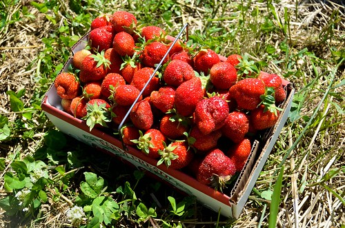 Giant Pile O' Strawberries