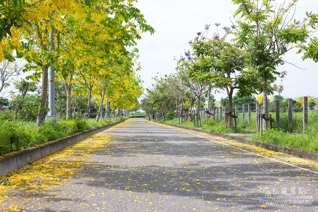 台南私藏景點--高鐵阿勃勒 (8)