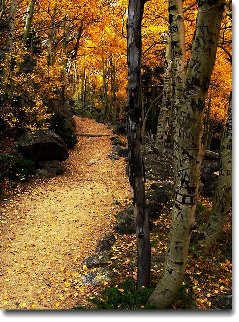 Aspen in Fall 47
