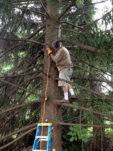 TreeTrimming-2