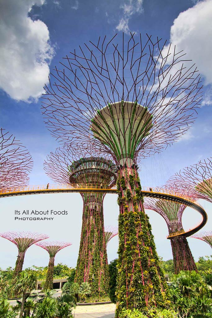 Supertree Groove Gardens By The Bay