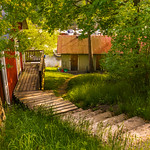 yard landscaping photo