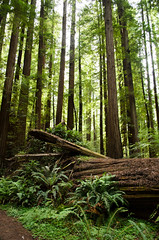 Humboldt Redwoods (21 of 37).jpg