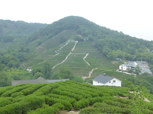 Zhejiang-Hangzhou-Longjing-The (39)
