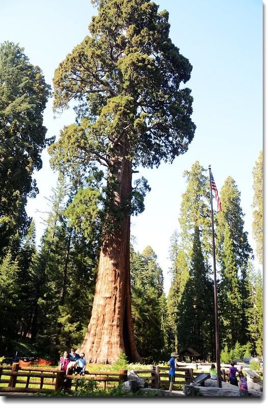 Sentinel Tree 4