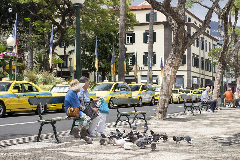 Pigeons on Avenida Arriaga - Funchal, Madeira