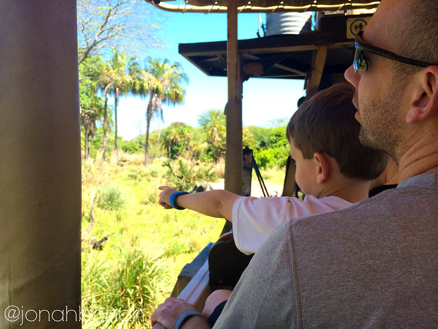 Kilimanjaro Safaris in Animal Kingdom