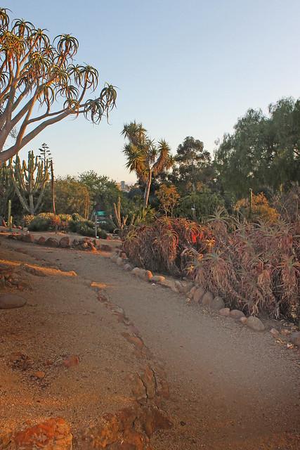 Old Cactus Garden