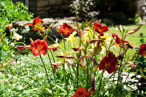 26flowers.jpg