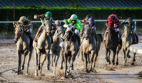 horses racetrack florida horseracing gulfstreampark hallandale solicitation actionphotography joropo horsesinaction mariohoubenphotography saravastar bersalufarminc