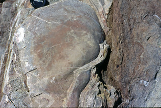 Stromatoporoid (West Point Formation, Upper Silurian; Bouleau Point, east of Gascons, Gaspe Peninsula, Quebec, Canada)