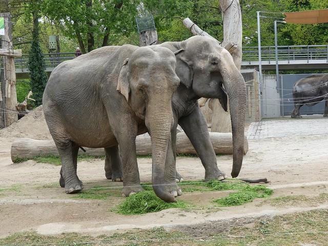 Rani und Nanda, Zoo Karlsruhe