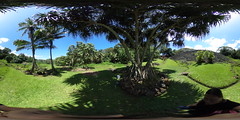 The Ulupo Heiau and Lo'i (Taro Field) from under the Puhala Tree - a 360 degree Equirectangular VR