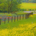 Texas_Wildflowers_Fences