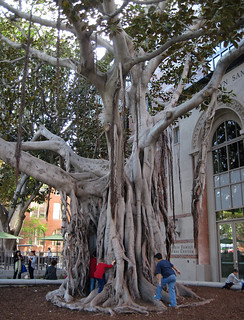 Gnarly Tree to Play in at USC