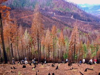 Glendale High School students plant 500 trees in the Douglas Complex burn