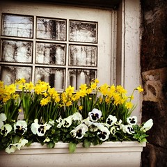 Springtime Bucks Co. window box.