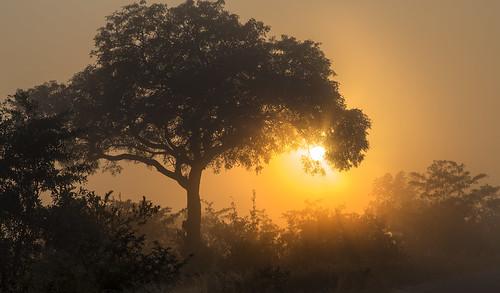 mist fog sunrise southafrica krugernationalpark mpumalanga krugerpark kruger mistysunrise