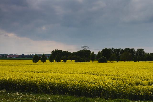 [048] Canola Fields