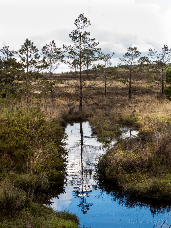Reflection in the gully