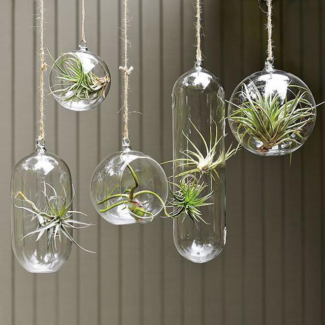 frascos-plantas