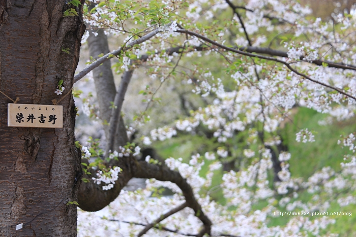20140502_AomoriSakura_1886 f