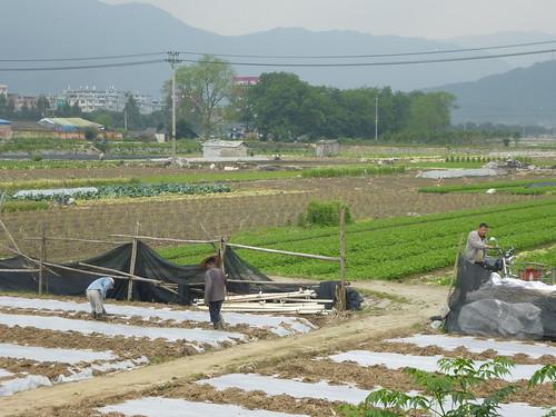 Fujian-Xiapu-Champs (2)