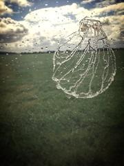 Après la pluie - Photo of Monnerville