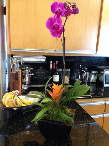 IMG_2447 orchid with bromeliad