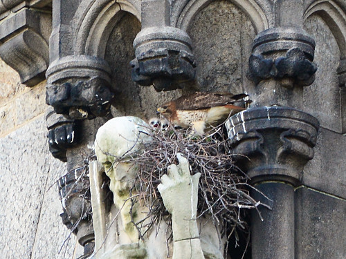Cathedral Hawk Nest (9223)
