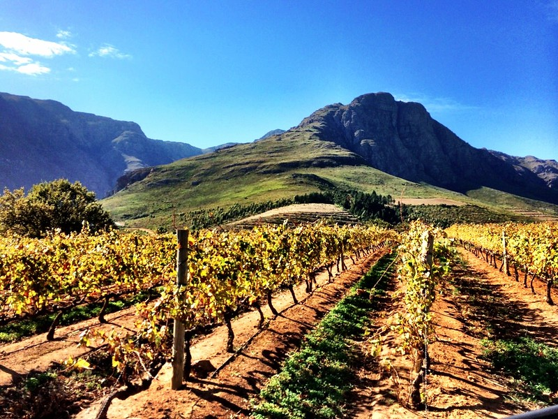 Winery experiences in south africa that go beyond the grape for Jardin wine south africa