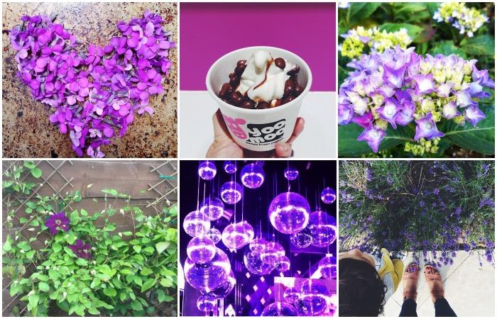 capturing-colour-purple