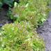 Small photo of Sla uit eigen tuin