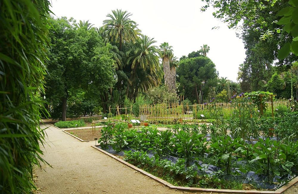 Jardin Botánico de Valencia (12)