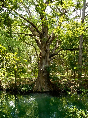 trees water landscape texas cypress wimberley waterscape