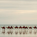 broome-1679-ps-w by pw-pix