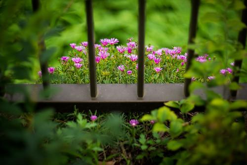 Photo:Micro garden By:kirainet