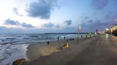 Tel Aviv 44019