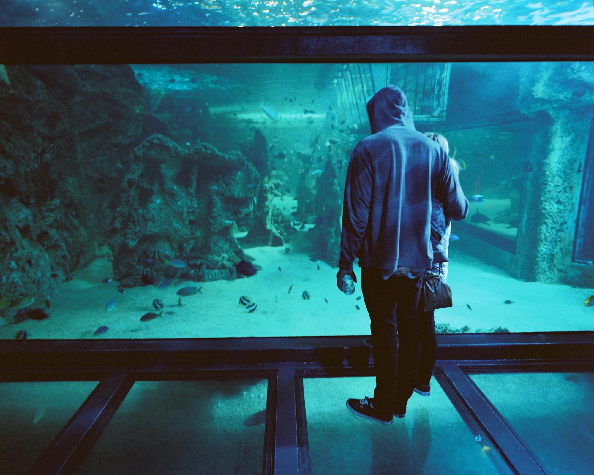 Sydney Aquarium iii