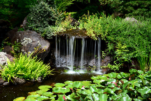 plants green water landscape waterfall rocks scenic