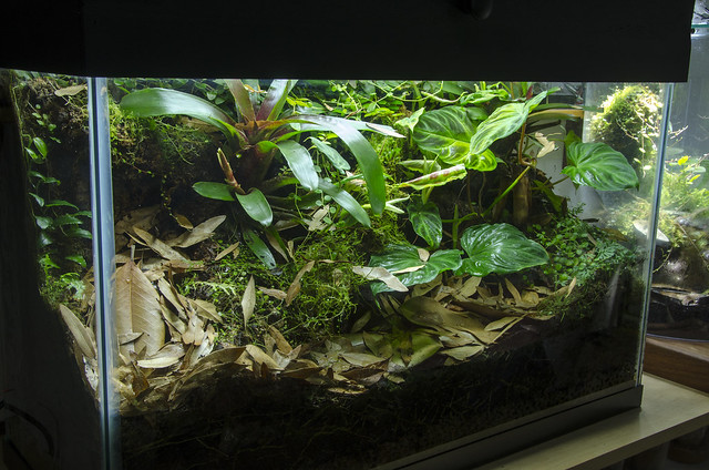 29 Gallon Phyllobates vittatus Vivarium - Update 07/30/14 ... 10 Gallon Vivarium