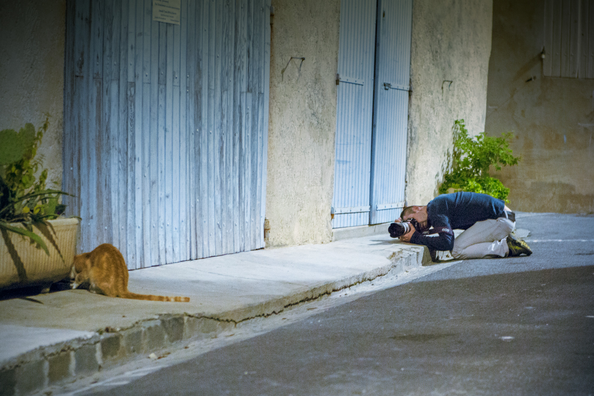 Cats&Photographers