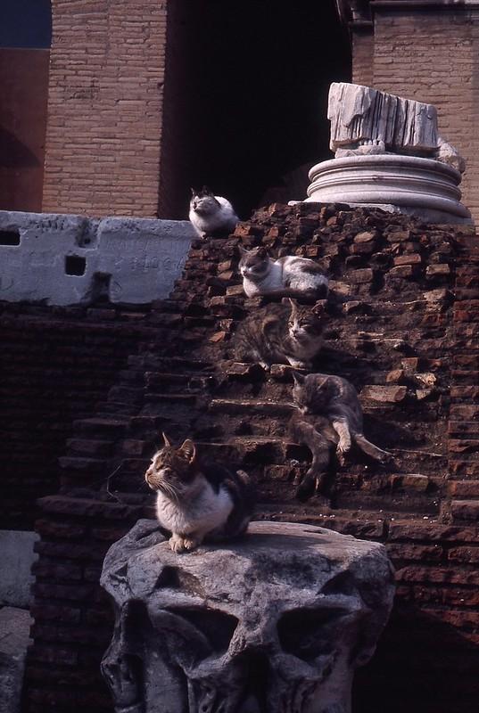 Colosseum Cats - Rome - February 1969