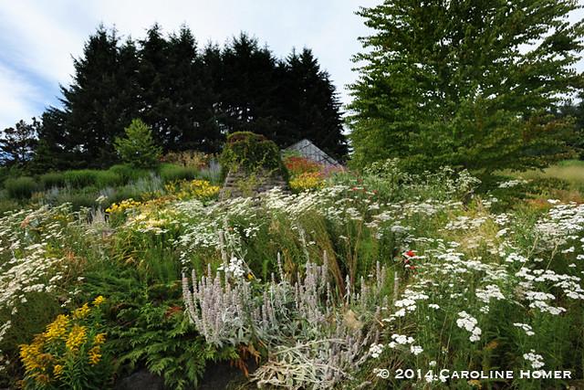 garden near greenhouse