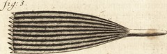 """Image from page 53 of """"Arcana naturae detecta"""" (1695)"""