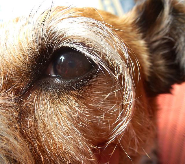 Rosie's eye, Panasonic DMC-TZ25